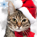 Download Find the Cat game Christmas! 1.5 APK
