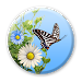 Download Butterfly  APK