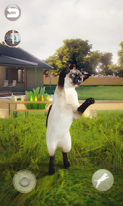 screenshot of Talking Siamese Cat version 1.0.1
